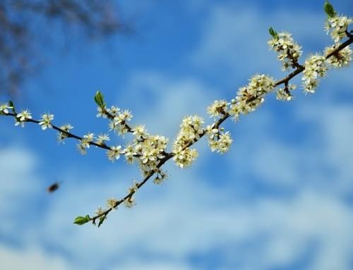 Meditationsimpuls April