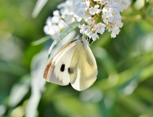 Kinderkirche to go: Schmetterlinge